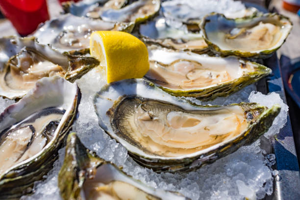 half shell shucked oysters on a bed of ice - borderless - oyster stock pictures, royalty-free photos & images