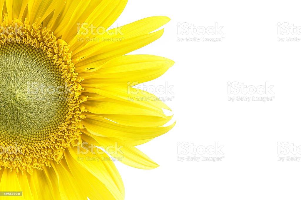 Half Sunflower royalty-free stock photo