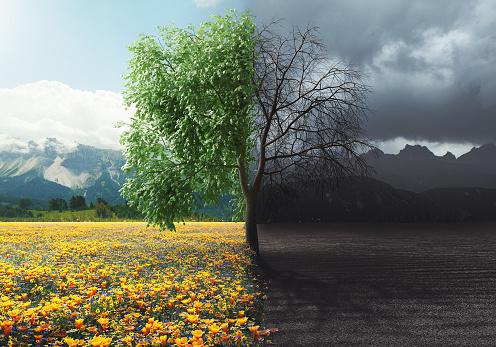 Half tree, good and evil, illustration concept