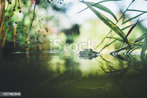 Half underwater garden with green frog
