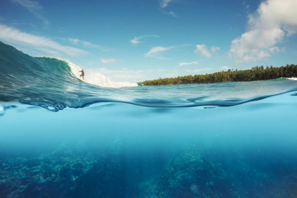 half underwater shot of surfer surfing a wave in Indo half underwater shot of surfer surfing a reef break wave in Indonesia underwater stock pictures, royalty-free photos & images