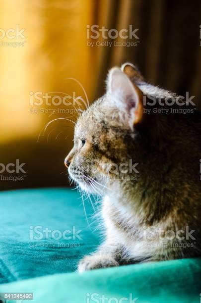 Halfface tabby cat portrait picture id841245492?b=1&k=6&m=841245492&s=612x612&h=znhxbphkva6qrsyomaunmshpnrhexjih5 aytkda2ei=