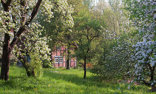 Half-timbered farm house and blooming apple trees in spring stock photo