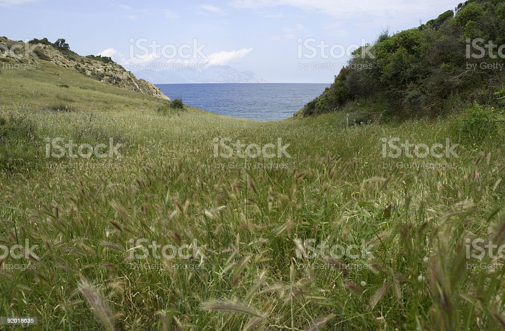 Halkidiki meadow royalty-free stock photo
