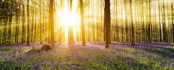 Hallerbos Forest – Foto
