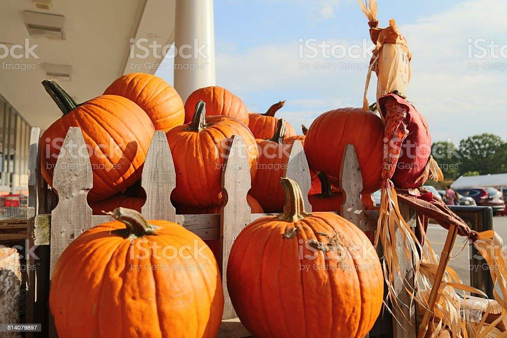 Hallooween and Pumpkin stock photo