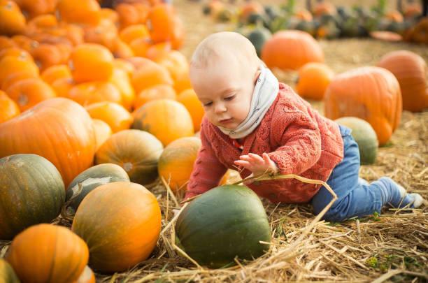 Halloween, a baby boy sitting on a pumpkin patch stock photo