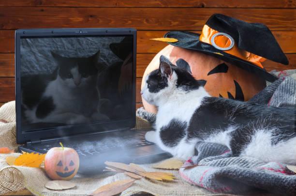 Halloween background orange pumpkin cat and laptop picture id856678606?b=1&k=6&m=856678606&s=612x612&w=0&h=m9x35l8s8aln4 qtuqgx1dzojdb42t1or vk6y7rx0y=