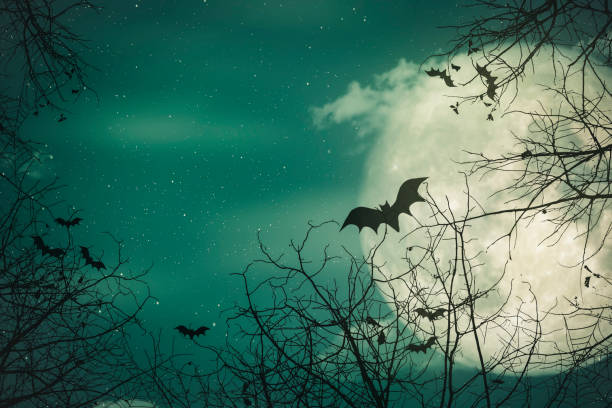 Halloween background. The spooky forest with full moon background stock photo