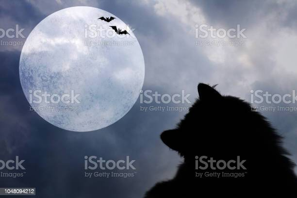 Halloween background with silhouettes of black cat bats and full moon picture id1048094212?b=1&k=6&m=1048094212&s=612x612&h=7 pgfs5dybsbh4n34mlndki 0f4kpgs evapt xfm74=