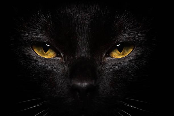 Halloween black cat closeup picture id150174104?b=1&k=6&m=150174104&s=612x612&w=0&h=svoy 8n8aosmmmz9gycazg0wij9h5q3u5ik3twbwxva=