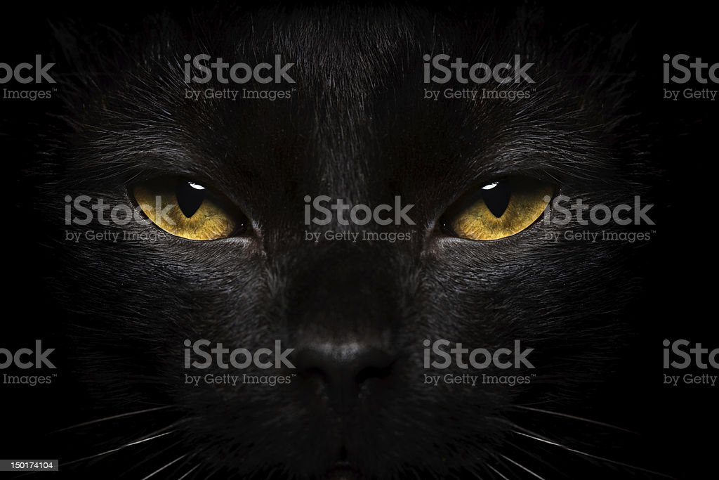Halloween Black Cat Close-up stock photo