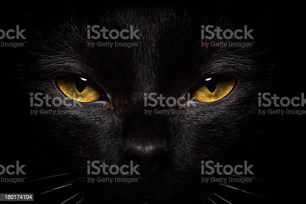 Halloween Black Cat Closeup Stock Photo - Download Image Now