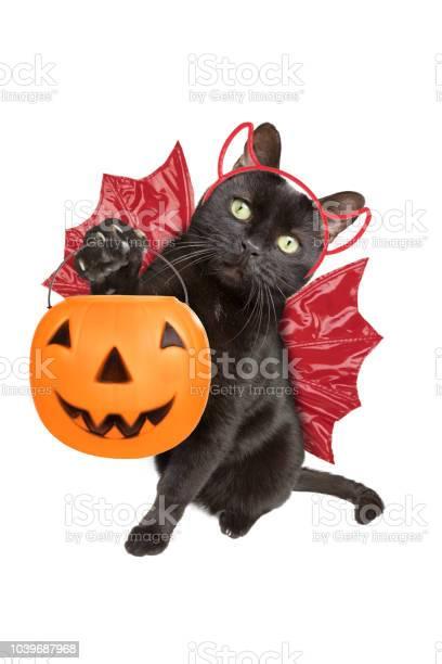 Halloween black cat dressed as devil trickortreating picture id1039687968?b=1&k=6&m=1039687968&s=612x612&h=p2297xrhopvtvtovvxijfjdqxyzlvhe0vdupsiqhyuo=