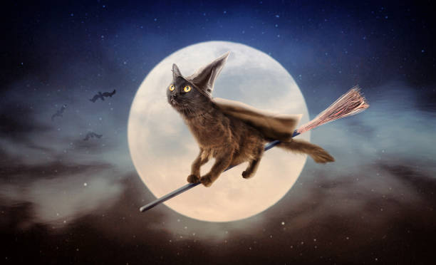 Halloween black cat on broom over moon picture id1023738954?b=1&k=6&m=1023738954&s=612x612&w=0&h=zqq p osrocacalnso67hevd64r tu4q0peouvm7qj8=