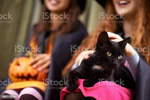 Halloween black cat picture id589110044?b=1&k=6&m=589110044&s=612x612&h=nfheejjadc9y91ieg98jsurylhihbt9hpxktraccs6w=