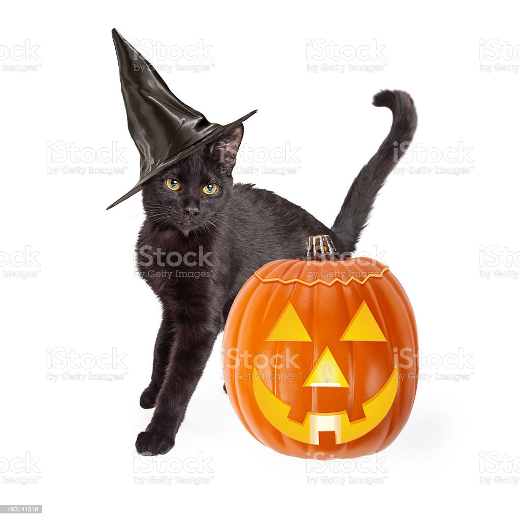Halloween Black Cat With Carved Pumpkin stock photo