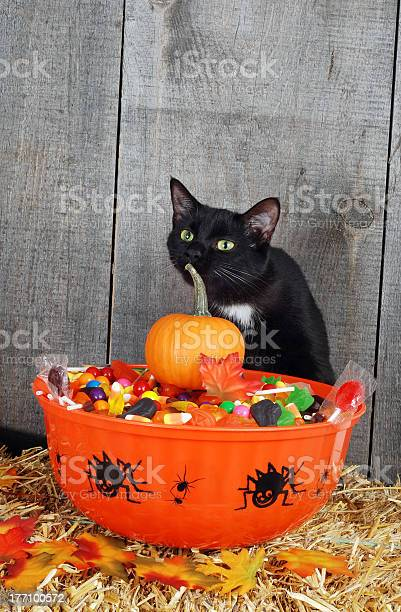 Halloween candy and black cat picture id177100572?b=1&k=6&m=177100572&s=612x612&h=hk8n57gbkb61th5qp86yw3wr2xf3iduawdf9dcx2ktw=