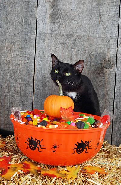 Halloween candy and black cat picture id177100572?b=1&k=6&m=177100572&s=612x612&w=0&h=wmikbfwfkqaeny9pr cg4v0orrehpm2oopkeoxezzjq=