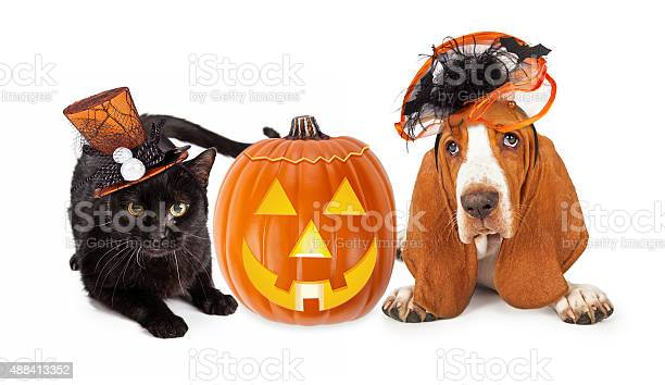 Halloween cat and dog in funny hats picture id488413352?b=1&k=6&m=488413352&s=612x612&h=jv 6ouho 7q bptw8bhxjlrmjf698bbin p0uedo8si=
