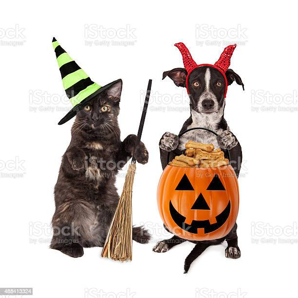 Halloween cat and dog trickortreating picture id488413324?b=1&k=6&m=488413324&s=612x612&h=bmmk9d9bbapbeocysurpvppgud9mxcjmhelkkj jiym=