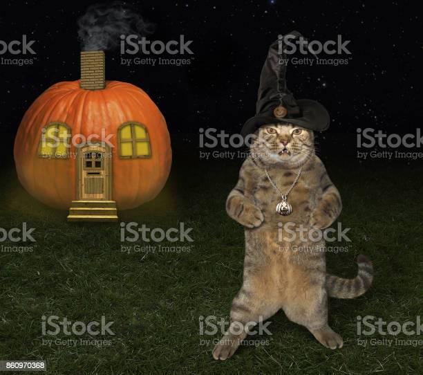 Halloween cat and pumpkin house picture id860970368?b=1&k=6&m=860970368&s=612x612&h=ysu1g5bzoet7iovbghhx3vpsaxzf2oi3u0jpwd8ffni=