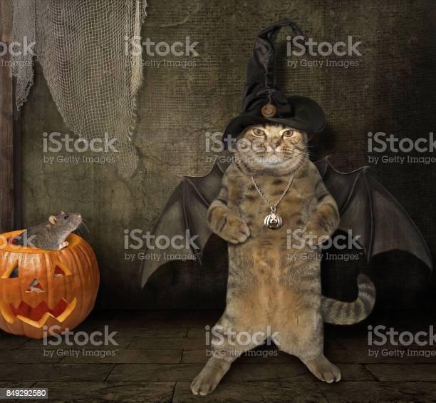 Halloween cat bat hat 5 picture id849292580?b=1&k=6&m=849292580&s=612x612&h=ntiirktkxc1nhmzp9koi0 0byp9nlyns3o83mkgbd1m=