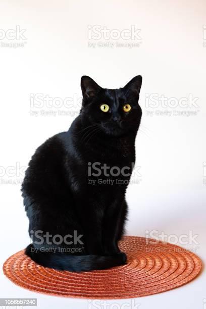 Halloween cat picture id1056557240?b=1&k=6&m=1056557240&s=612x612&h=7d64pcucsygad5yl1y4 bi5qwdbm8rmok9lhxcwu2vm=