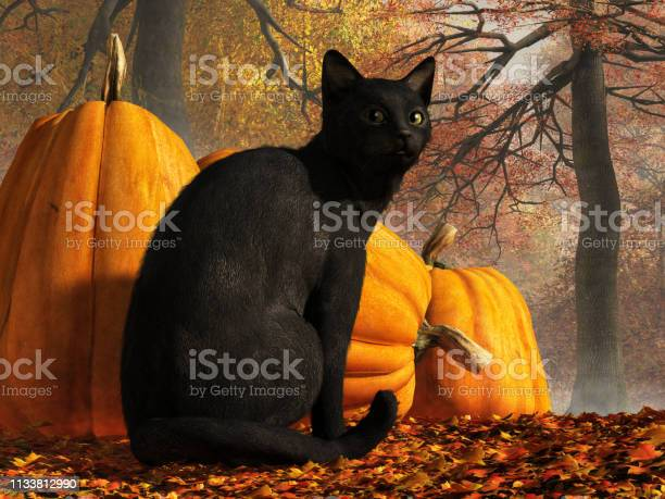 Halloween cat picture id1133812990?b=1&k=6&m=1133812990&s=612x612&h=0xrwuxp htyfj5bo8fbnijz9sqids24umnsthiynkdg=