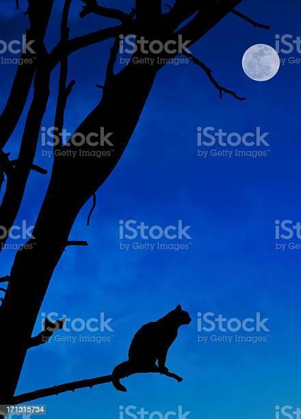 Halloween cat picture id171315734?b=1&k=6&m=171315734&s=612x612&h=eqj2pvqmsuei9gzhdiautqvn6w6rt 16glqg4tnunca=