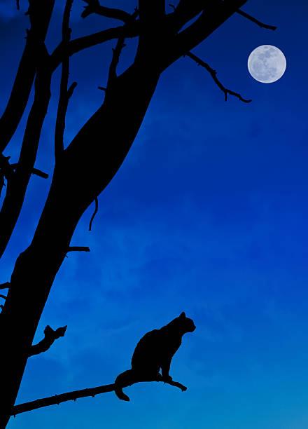 Halloween cat picture id171315734?b=1&k=6&m=171315734&s=612x612&w=0&h=cx zygsqjve5s9roevgyf janl1zuejf9py i79k ze=
