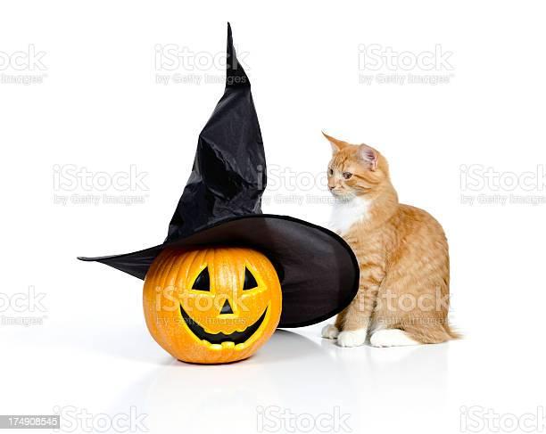 Halloween cat picture id174908545?b=1&k=6&m=174908545&s=612x612&h=dw8htf4kput9thtwwfkek ybmxd8pzkepiohqt ps6s=