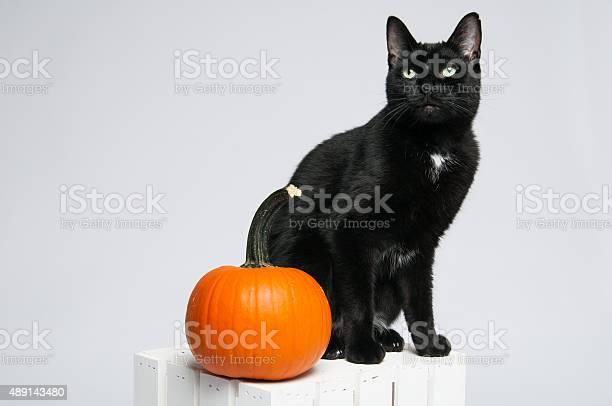 Halloween cat picture id489143480?b=1&k=6&m=489143480&s=612x612&h=fjtvw25vy7myl3qcfkoouckzcjmrwnfnwfmfhtgta7i=