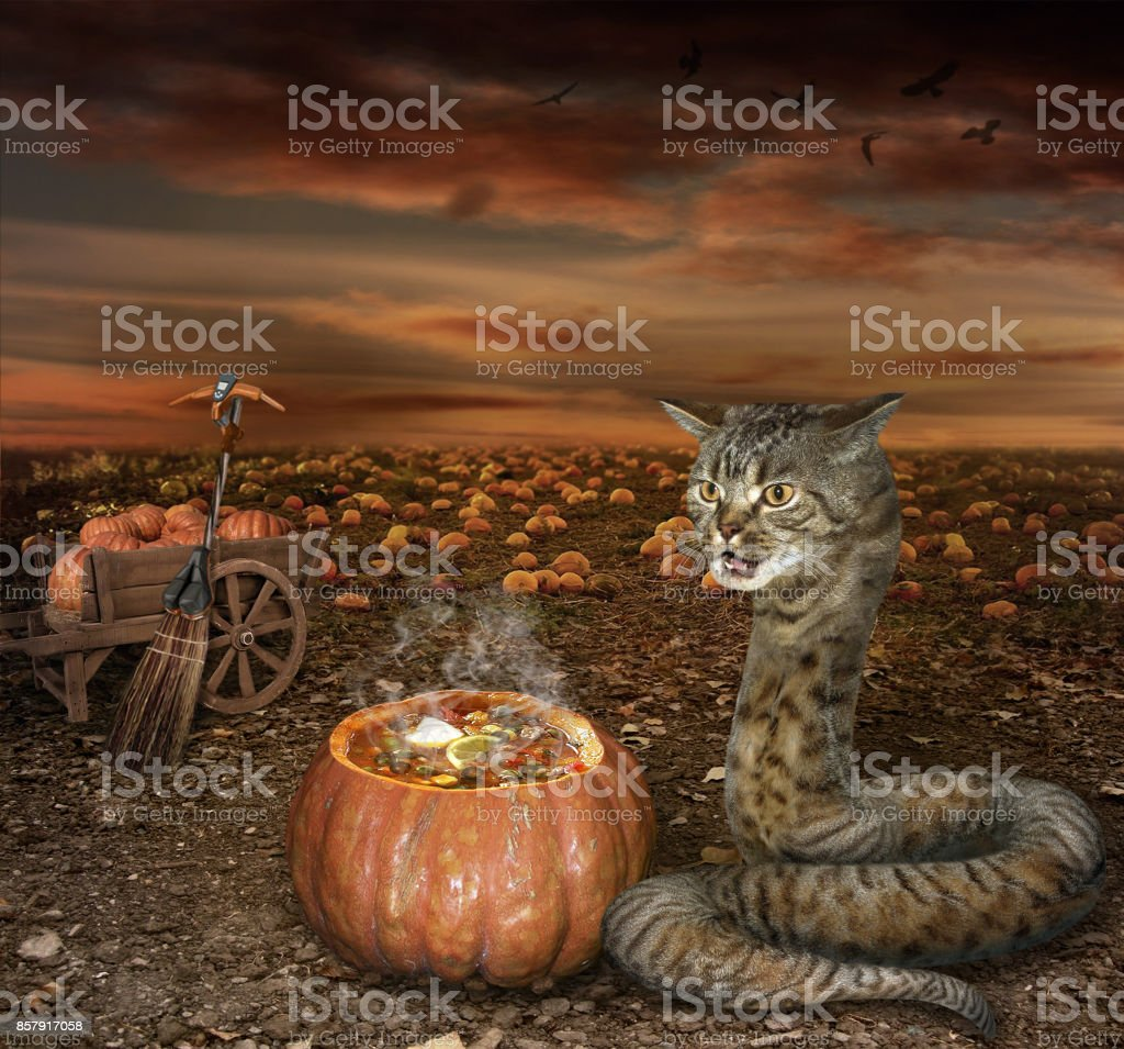 Halloween cat snake cook stock photo
