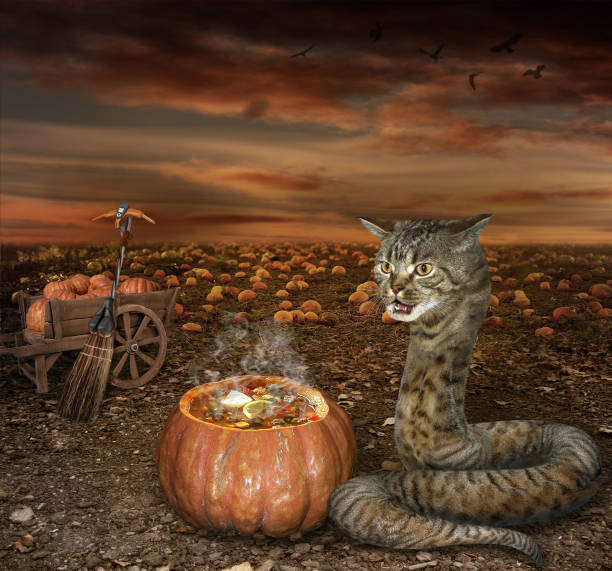 ハロウィン猫蛇料理 - ヘビ ストックフォトと画像