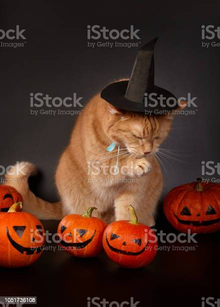 Halloween concept picture id1051736108?b=1&k=6&m=1051736108&s=612x612&h=qaylgdydu1q2ylo0yyxwllafbc 0khvbh9vt5kohzzc=