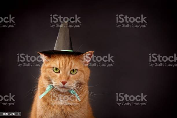 Halloween concept picture id1051736110?b=1&k=6&m=1051736110&s=612x612&h=ricjhdmkotx8 ms7gdcp05h5aemneonaqv8j97izhja=