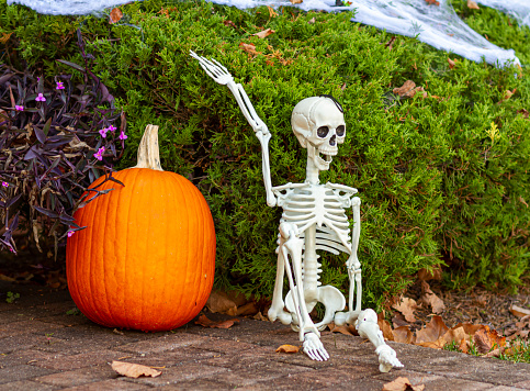 Halloween decoration in front of a house. There is a giant pumpkin, a skeleton sitting on floor, shrubs covered with fake spider webs.