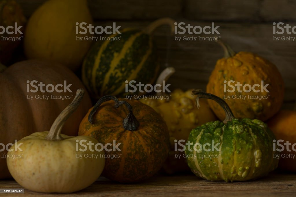 Halloween decorative  pumpkins. royalty-free stock photo