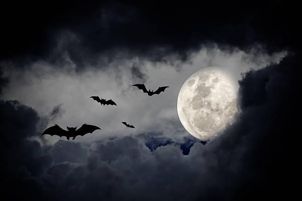 halloween design-hintergrund - waldfriedhof stock-fotos und bilder