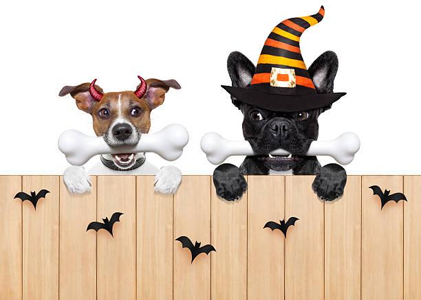 halloween  devil dogs hungry for food - kürbis hundeleckerlis stock-fotos und bilder