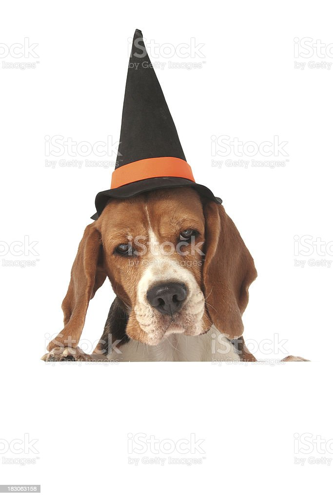 Halloween dog above blank sign royalty-free stock photo