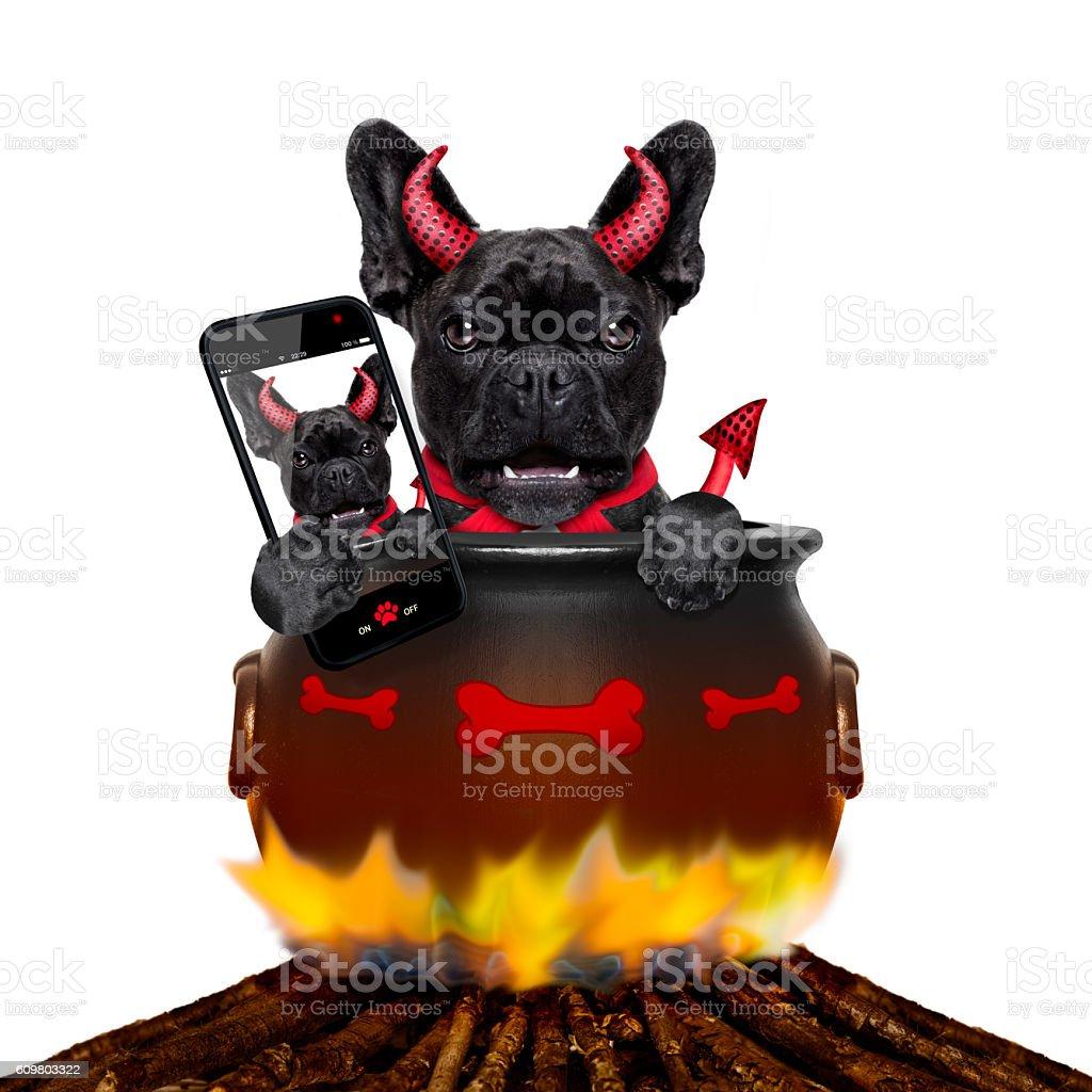 halloween dog and bonfire stock photo