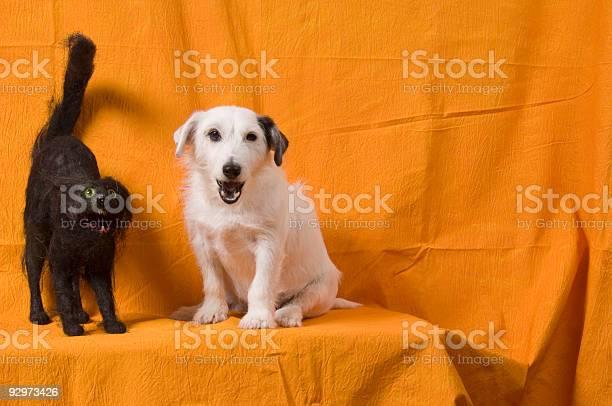 Halloween dog cat picture id92973426?b=1&k=6&m=92973426&s=612x612&h=dgd d1 tu4se5dr4rcdjodpdvi5sruhnv1v1hhzfjvw=
