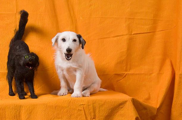 Halloween dog cat picture id92973426?b=1&k=6&m=92973426&s=612x612&w=0&h=bqjejq3oojlfrd96knsviaw2hgo8gyg0y5iu9 fnrjk=
