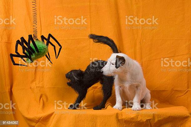 Halloween dog cat spider picture id91434052?b=1&k=6&m=91434052&s=612x612&h=tzrlp uksfs9jva y8qo7t7tvgm7crnv vxkuqrankq=