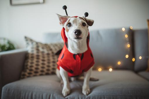 Disfraces para perro