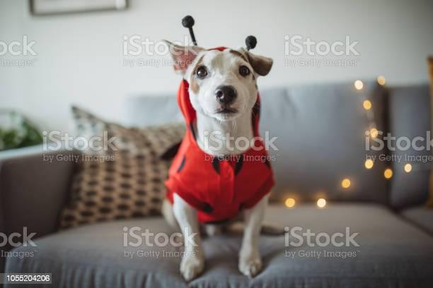 Halloween dog picture id1055204206?b=1&k=6&m=1055204206&s=612x612&h=4udyb7isvhmwciehonmya82v5  1ryuc ke5pdw9juw=