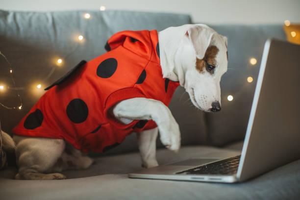Halloween-Hund – Foto