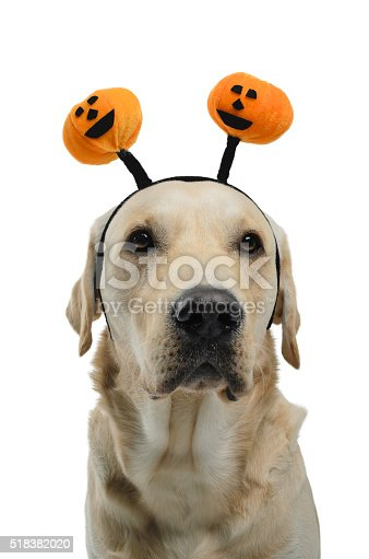 Dog with a halloween costume